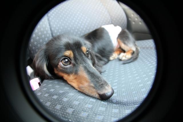 犬や猫を連れた乗車客への対応は?安全のためにタクシー運転手が行う事